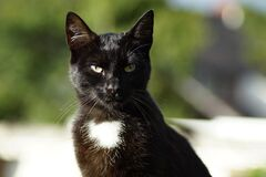 Shallow Focus Photography of Black Cat Stock Image