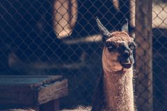 Shallow Focus Photography of Brown and Black Animal Stock Photos