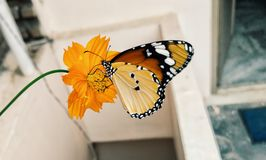 Shallow Focus Photography of Brown Black and Yellow Butterfly on Yellow Flower stock photos
