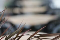 Shallow Focus Photography of Brown Grass Royalty Free Stock Photo