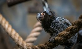 Shallow Focus Photography of Brown and Gray Bat Stock Photo