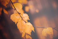 Shallow Focus Photography Of Brown Leaves Royalty Free Stock Images