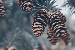 Shallow Focus Photography of Brown Pinecones Stock Photo
