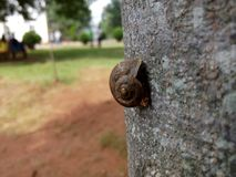 Shallow Focus Photography of Brown Snail on Tree Trunk Stock Images