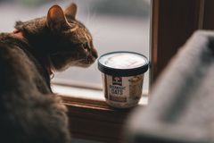 Shallow Focus Photography of Cat stock photos