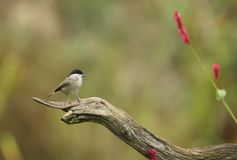 Shallow Focus Photography of Gray Bird on Brown Branch Stock Image