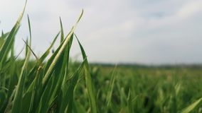 Shallow Focus Photography of Green Grass Field Stock Photography