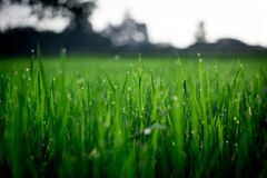 Shallow Focus Photography of Green Grasses during Daytime Stock Image