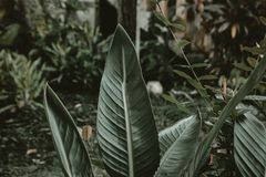 Shallow Focus Photography of Green Leafed Plant royalty free stock photography