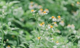 Shallow Focus Photography of Green Leafed Plants With White Flowers stock photo