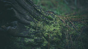 Shallow Focus Photography of Green Leaved Plants Royalty Free Stock Images