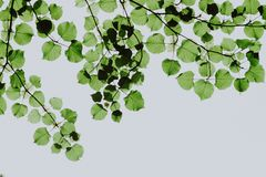 Shallow Focus Photography of Green Leaves stock images