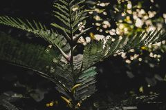 Shallow Focus Photography of Green Leaves stock image