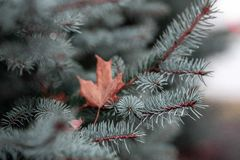 Shallow Focus Photography of Green Leaves stock photography