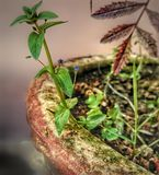 Shallow Focus Photography of Green Leaves Plant Stock Photos