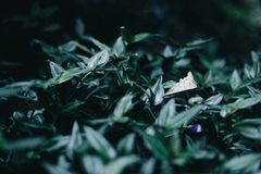 Shallow Focus Photography of Green Plant stock photos