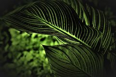 Shallow Focus Photography of Green Plant Leaves royalty free stock images