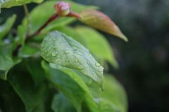 Shallow Focus Photography of Leaf With Water Droplets Royalty Free Stock Photos
