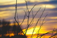 Shallow Focus Photography of Leafless Tree Branch during Sunset Stock Photography