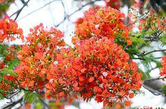 Shallow Focus Photography of Orange Flowers Royalty Free Stock Images