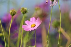Shallow Focus Photography of Pink Flower royalty free stock photo