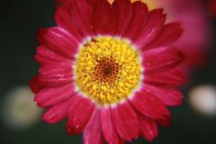 Shallow Focus Photography of Pink Flower stock images