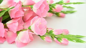 Shallow Focus Photography of Pink Flowers Royalty Free Stock Images