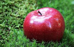 Shallow Focus Photography of Red Apple in Green Grass Royalty Free Stock Photography