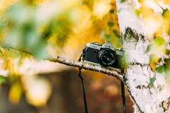 Shallow Focus Photography of Silver and Black Dslr Camera on Brown Trunk Royalty Free Stock Images