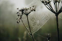 Shallow Focus Photography of a Spiderweb With Raindrops Royalty Free Stock Photos