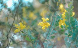 Shallow Focus Photography of Tree With Yellow Petal Flowers royalty free stock photos
