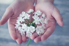 Shallow Focus Photography of White Flower Stock Images