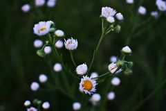 Shallow Focus Photography Of White Petaled Flowers stock photo
