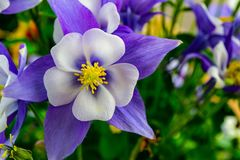 Shallow Focus Photography of White and Purple Flowers Royalty Free Stock Photography