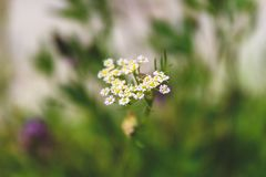 Shallow Focus Photography of White-and-yellow Flowers royalty free stock photo