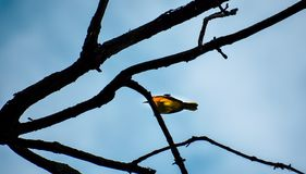 Shallow Focus Photography of Yellow Bird on Brown Tree Branch royalty free stock photo