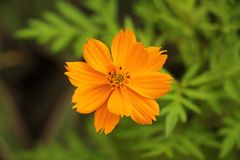 Shallow Focus Photography of Yellow Flowers stock photography