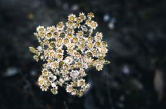 Shallow Focus Photography of Yellow Flowers royalty free stock photo