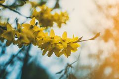 Shallow Focus Photography of Yellow Flowers royalty free stock image