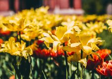 Shallow Focus Photography of Yellow Flowers stock image