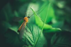 Shallow Focus Photography of Yellow Mosquito Royalty Free Stock Photos