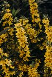 Shallow Focus Photography of Yellow Petal Flowers stock images