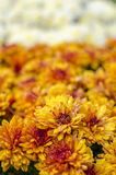 Shallow Focus Photography of Yellow and Red Flower Stock Photo