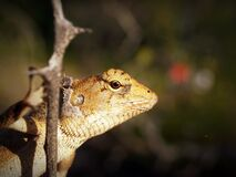 Shallow Focus Photography of Yellow and White Lizard Clinging on Tree Branch stock photo