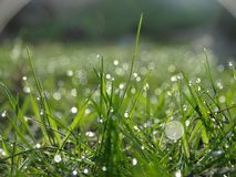 Shallow Focus of Raindrops On Green Grass Stock Photos