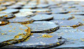 Shallow focus shot of slate tiles on a flat roof covered in lichen.  stock images
