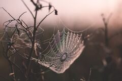 Shallow Focus of Spider Web Royalty Free Stock Photography