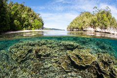 Healthy Coral Reef in a Remote Part of Raja Ampat royalty free stock photo