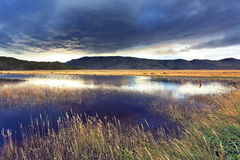 Shallow lake, overgrown with reeds Royalty Free Stock Images