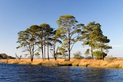 Shallow lake with pines in Drenthe Royalty Free Stock Photo
